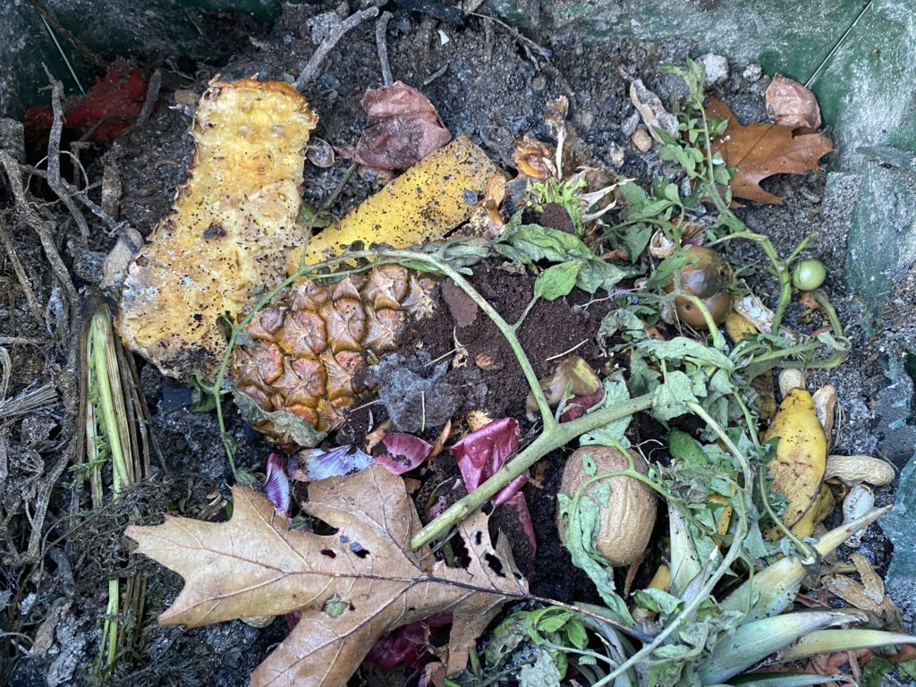 Inside of a compost bin filled with pineapple rinds, carrot tops, dead tomato plan, brown oak leaf, decaying kiwi, ashes, purple onion peels, peanut shells and other decomposing foods and plants