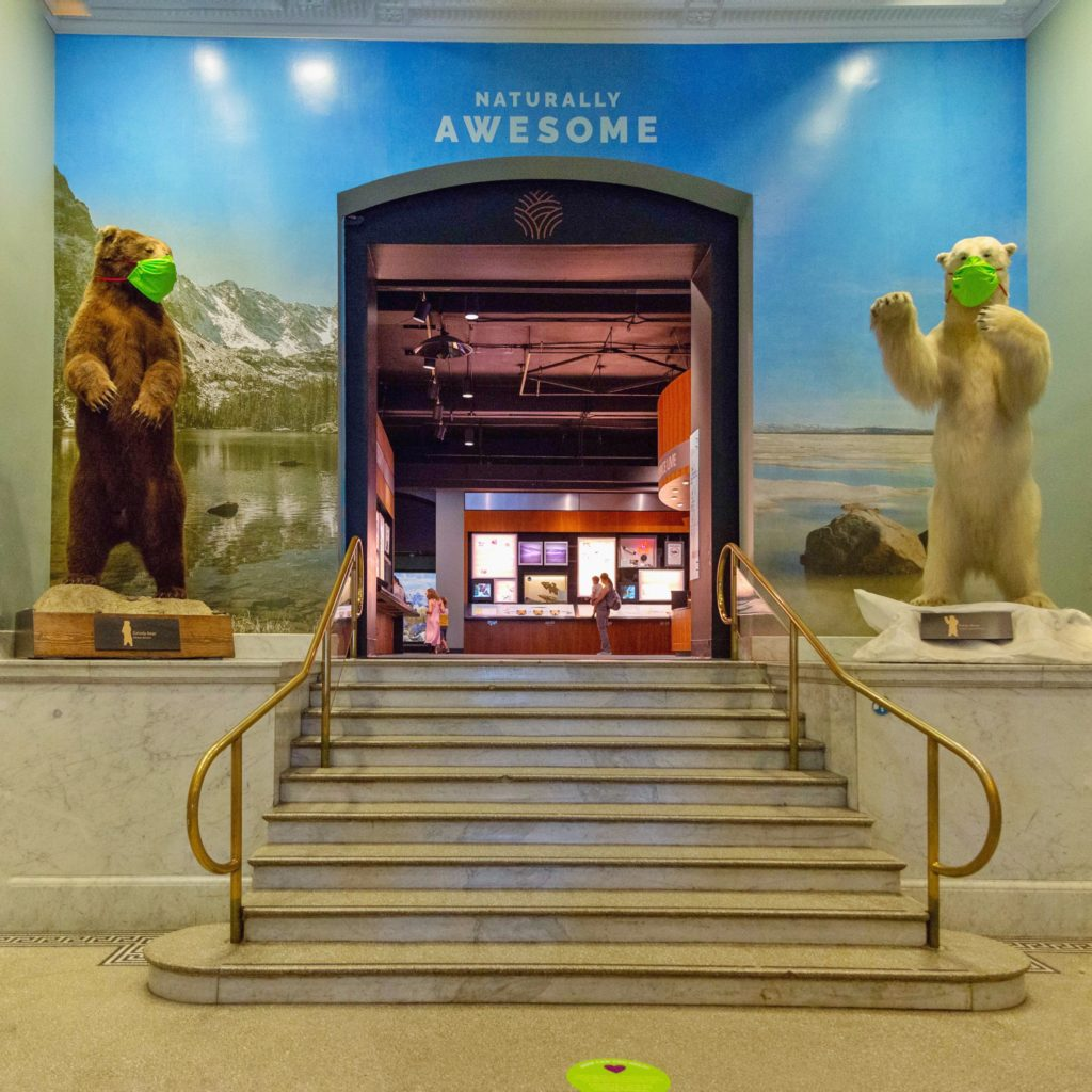 Marble stairs in the Academy Lobby with brown and white taxidermy bears at the top, both wearing neon green masks.