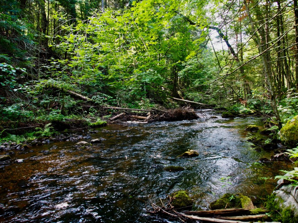 Stream running through a wooded area