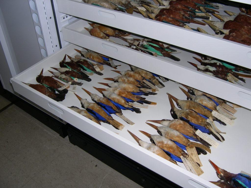 a drawer with bird specimens