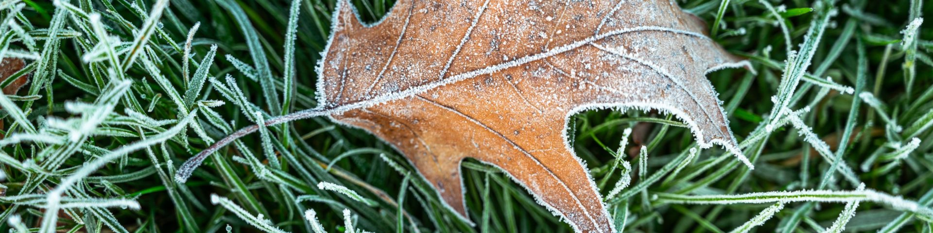 Frost-covered grass and leaf